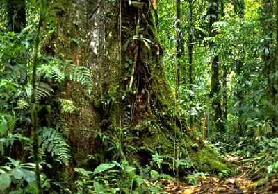 Tropical Rainforest of Brazil (Thanks To Wiki People Are Allowed To Use This Photo For Any Purpose!)