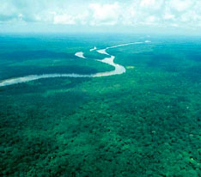 Rainforest of Congo - A Rainforest Located To a LDC
