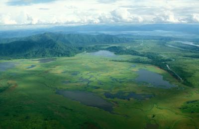 Rainforest of Papua New Guinea