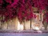 blooming tree VS shabby house
