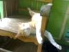 My cat Kukie