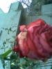 ı love flowers