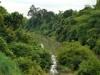 Rainforest of Thailand