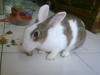 """My Cute Rabbit named 'Hello' """