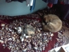 My pretty girl cat and my dog Leo. They are friends and like to sleep beside each other. ;)
