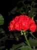 A Beautiful flower for friends