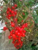 what's this!!! This flower is grown in our garden but do not know its name!????