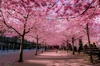 spring coming,it make me happy,it has happiness in her huge