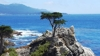 Lone Cypress Tree, Pebble Beach, California