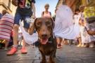 Pet Parades